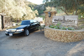 A limo on a wine tour in Los Angeles